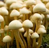 How fungi works?